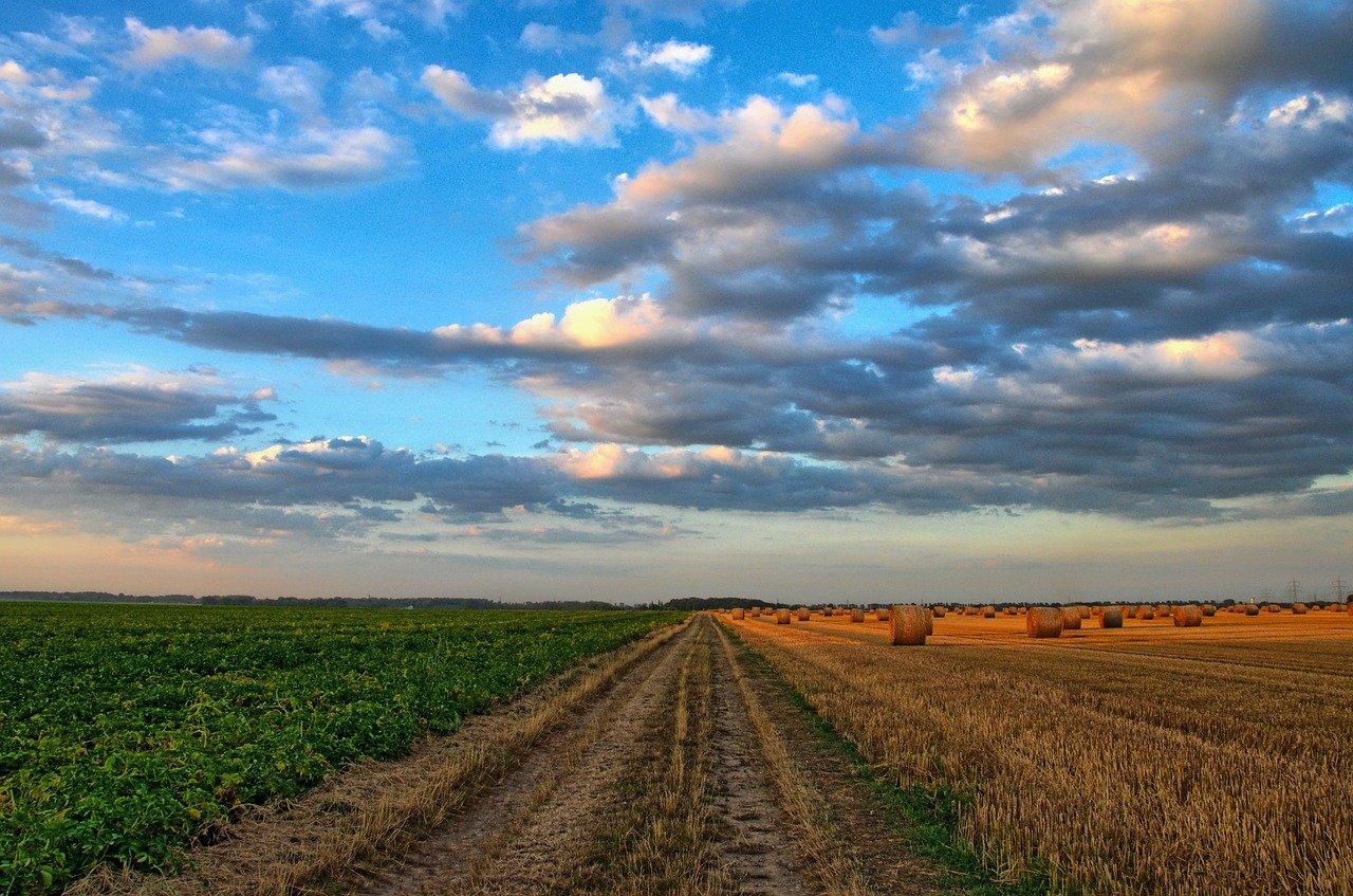 field, road, rural-213364.jpg